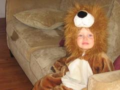 Hedy Lion