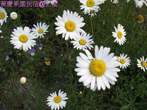 黃慶果園民宿CIMG2487