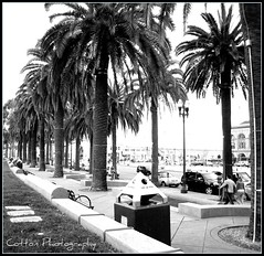 Palm (Rachel Cotton Photography) Tags: trees bay san recycling walkers plam francsico debate rachelcotton cottonphotography