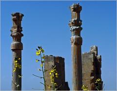 Nation Gate (--Parseh--) (azadyasamin) Tags: blue sky flower yellow gate iran nation panasonic civilization shiraz fz5 perspolis jamshid azad yasamin parseh takht thegateofallnations