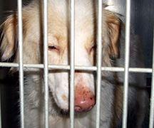 Kinship Circle - 2008-06-13 - Katrina-NOLA Rescuer Dead 03