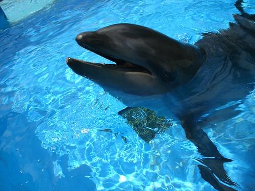 Wholphin | Sea Life Park Hawaii
