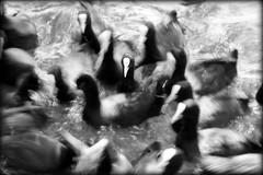 TuttoIntornoFreme (Giancarlo Mella (OFF)) Tags: italy photography photo digitalcamera giancarlomella