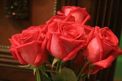 {            (Misor [Qtr]) Tags: flower canon miss dior   {           400d  abigfave aplusphoto