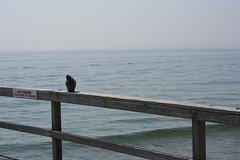 Ocean Grove (sheyrakelley) Tags: vacation landscapes honeymoon oceangrove travelhoneymoon