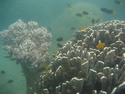 coral Low Islet