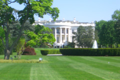 White House (Washington, District of Columbia, United States) Photo