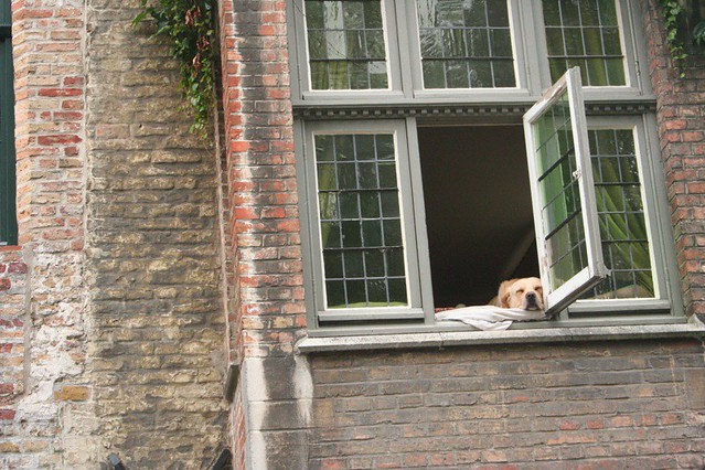 cruise through the canals of Bruges, dog napping in the window