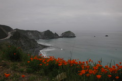 Big Sur, March 2002 (nowhereonearth) Tags: ocean california road trip travel orange mountains flower nature misty coast march sand rocks cloudy blossom native gray bigsur overcast cliffs explore pch highway1 pacificocean coastal poppies bloom coastline centralcoast eschscholzia californica rainyseason californiapoppies pacificcoasthighway papaveraceae orangeflowers aribbonofhighway ©janeauerbach pleasedonotreproducecopyorrepostphotographwithoutphotographerspermission dailynaturetnc11