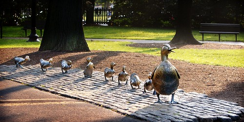 make way for the damn ducklings