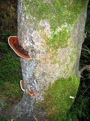 mushroom (Hananeh) Tags: jungle noor