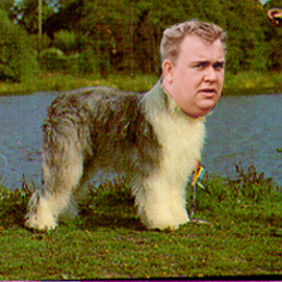 john candy as a sheepdog