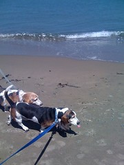 Two bassethounds and an ocean