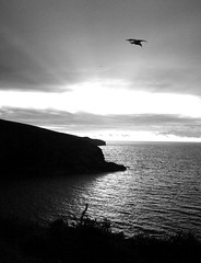 Evening Port Isaac Black and white 2