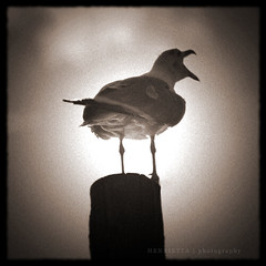 Seagull (H J A) Tags: gteborg holga seagull toycamera oldfilm oneofmybest fiskebck igotaprizeforthisphoto