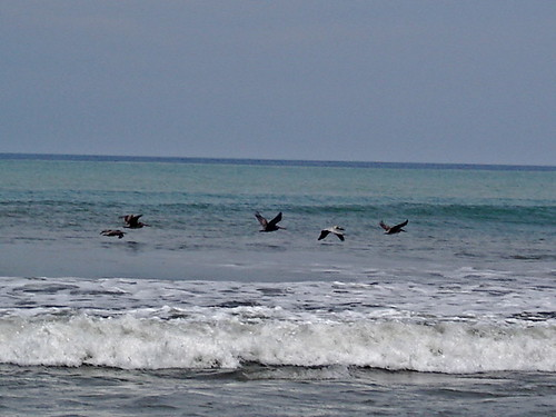 Ecuador-Beach-Birds-
