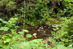 cool pool (dolanh) Tags: oregoncoast oswaldweststatepark shortsandsbeach