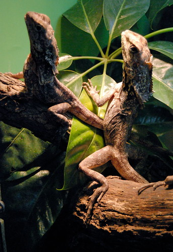 Saint Louis Zoological Garden, in Saint Louis, Missouri, USA - lizards