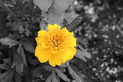 The Flower (brasil0069) Tags: loveit abigfave rubyphotographer loveitalwayscommenton5