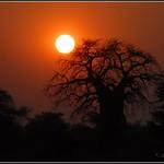 Sunset Baobab
