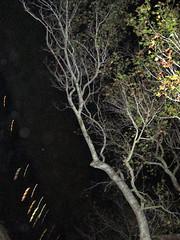 Wooden lightning (radPhotos) Tags: xmas fl stpete crescentlake