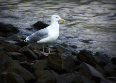one of those days (Singing With Light) Tags: city water rocks seagull nj newport jersey bej