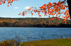 Lake Colors (shutterbugMike) Tags: autumn autumnfoliage fallleaves fall leaf fallcolors newhampshire nh pemigewasset autumnleaves autumncolors fallfoliage pemi meredithnh autumninnewengland fallinnh fallinnewengland lakepemigewasset meredithnewhampshire autumninnh