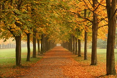 Dresden (Bert Kaufmann) Tags: park parque autumn trees tree leave colors leaves germany deutschland dresden bomen colours herfst boom autumnleaves autumncolors arbres schloss allemagne arbre baum schlosspark herfstkleuren duitsland pillnitz baume bladeren herfstbladeren mywinners abigfave autumnncolours