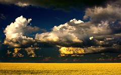 North Atlantic (on the prairies) (Ken Yuel) Tags: northatlantic theperfectstorm haveagreatday prairieskies canolafields anawesomeshot ruralmanitoba digitalagent vosplusbellesphotos seaofcanola