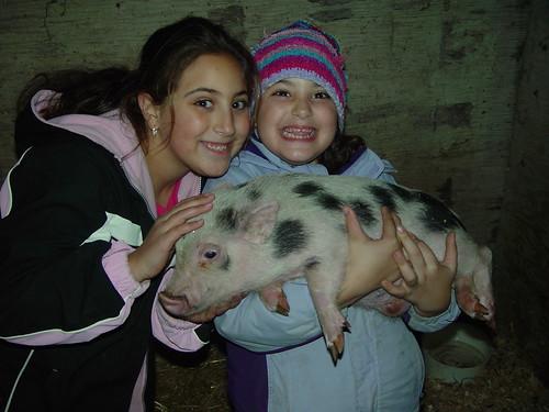 Amazoncom mini pig clothes