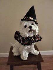 Westie Halloween