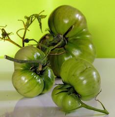 freaky tomatoes 5005 R