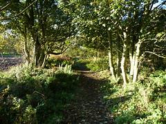 P1000226 (kilrenny) Tags: trees woods atumn