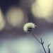 I dream in bokeh by Leaca's Philosophy