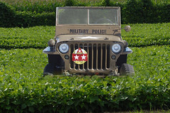 Jeep in the field ~(IAA-54)~ (Gravityx9) Tags: photoshop ride jeep military chop amer iaa zazzle 1108 112008 psfo itsanaddiction concordians 110808 rainbowfragments oradaydm iaa54 flickrsunitednations