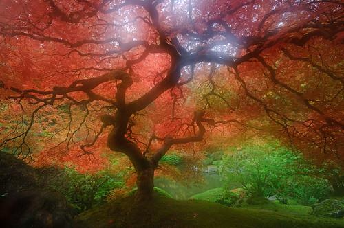 Japenese Garden - Portland