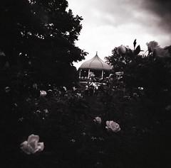 gazebo2.jpg (Xoe Craft) Tags: roses blackandwhite bw holga band gazebo lawrencekansas artinthepark