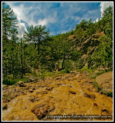 Karacasu Stream at Pine Forest by voyageAnatolia