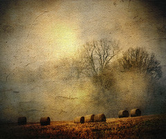 Make Hay While the Sun Shines (Wondertubs) Tags: november trees england mist texture field gloucestershire canvas hay bales oldmaster painswick holcombe