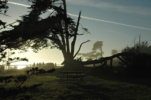 Slip Stream Tree, Bench, Santa Cruz, California, USA by Wonderlane