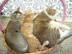 Club Cat Sandwich