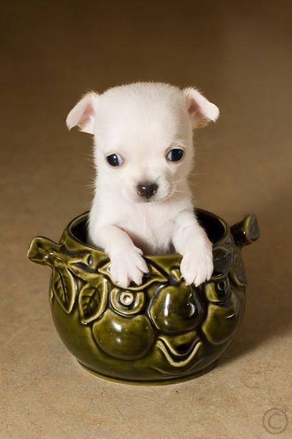 Puppy jam :)