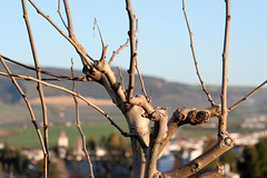 Dos puntos de vista (II) (Jos Francisco_(Fuen446)) Tags: torre pueblo iglesia paisaje nido soe mlaga cigea chimenea otw arriate photographyrocks 10millionphotos flickraward goldstaraward rubyphotographer