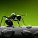 Ant on the line by Mitch Lahey