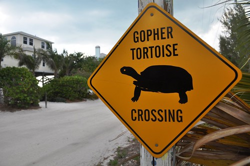 One of Several Gopher Tortoise Crossing Signs on Don Pedro Island, Fla.