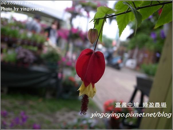嘉義中埔_綠盈農場20110417_R0019061