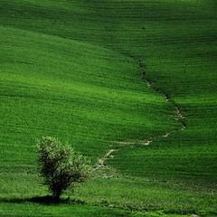 [フリー画像] 自然・風景, 樹木, 草原, グリーン, 201106022300