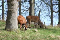 Longleat Safari Park #6