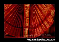 web 160 (www.seyaru.com - Tissa Nimalachandra) Tags: orange color with nothing naranja rhymes blorenge rhymeswithorange netneutrality matters2me