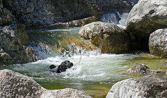 A completely happy dog!! (rotraud_71) Tags: dog water spring rocks labrador ella mywinners citrit qualitypixels aschauerklamm haiderhof